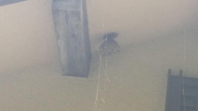 和気町でハチ駆除